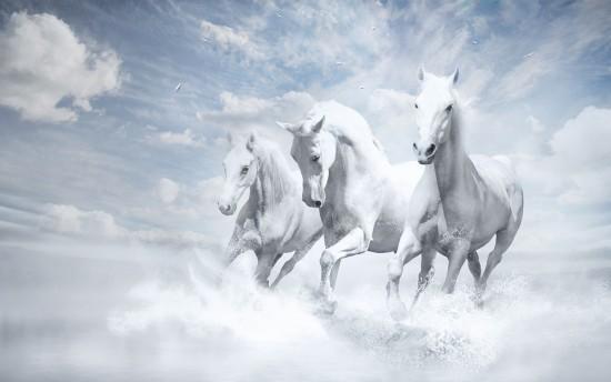 cavalos brancos_white_horses-wide